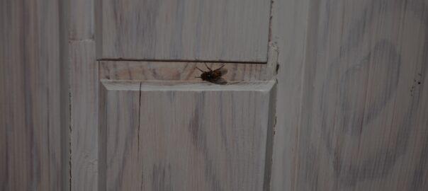 Flue på loft