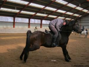 Hesten tisser